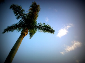 Palm Tree Swaying