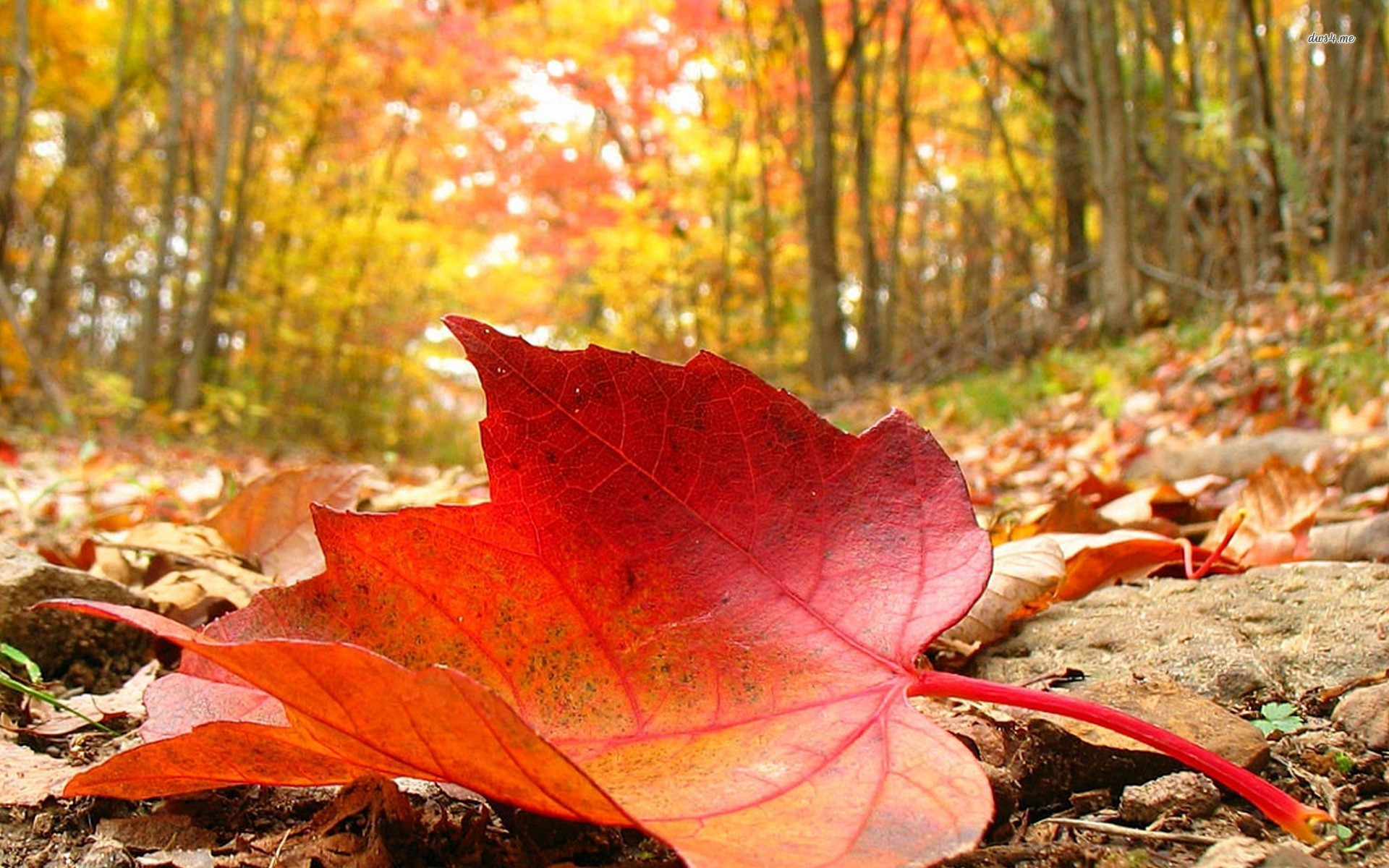 The fallen leaves the passing of time busted flip flops - Image automne gratuite imprimer ...